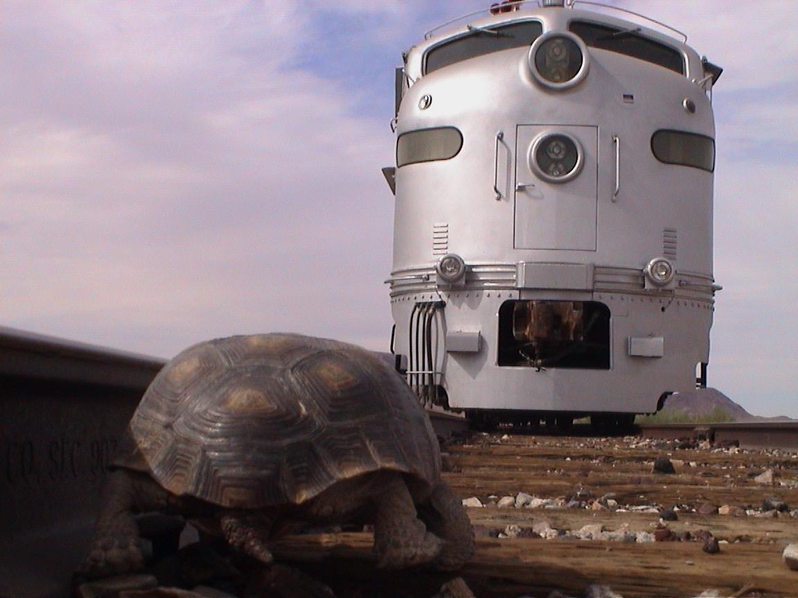 Adam's Tortoise Photo